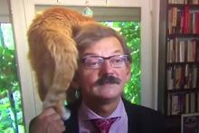 Röportaj sırasında kedisinin gazabına uğrayan tarihçi