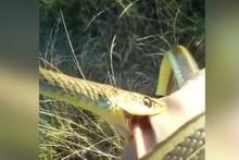 Koluna dolanan yılan elini böyle ısırdı!