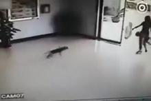 Köpeklerin bu hareketi hayrete düşürdü