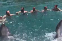 Yunus balıkları horon oynadı