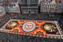 Brüksel'de dev çiçek  halı sergilenmeye başlandı