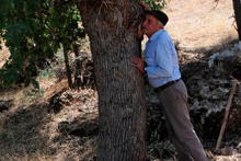Ağaçlardan toplayıp kilosu 500 liraya satıyorlar!