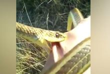 Eline aldığı yılanın saldırısına uğradı!