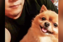 Sahibinin yaptığını yapan köpek sosyal medyada beğeniyle izlendi