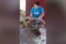 Bisiklet tekeri ile ayçiçeği böyle soydu