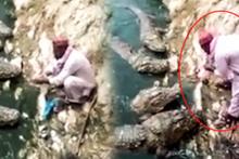 Cesur adam 5 timsahı elleriyle böyle besledi!