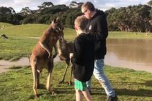 Yanına yaklaşan küçük çocuğa yumruk atan kanguru