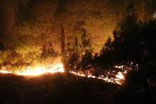 Sivas'ta orman yangını! Rüzgarın etkisiyle büyüdü