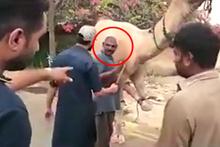 Kör bıçakla deveyi keseyim derken hayatının şokunu yaşadı!