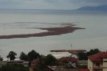 Ordu'yu sel vurdu, denizde fındık adası oluştu...
