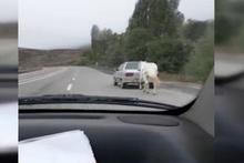 Erzurum'da dehşete düşüren görüntü! Atı böyle götürdü