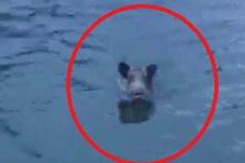 Balık zannettiği şeyin domuz olduğunu görünce şaşkına döndü