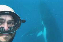 Canını hiçe sayıp balinayla dalış yapan dalgıcın nefes kesen anları