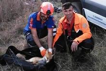 Kuyuya düşen tilkiyi AFAD kurtardı