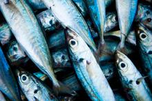 Kırmızı etteki tehlike balıkta var mı?