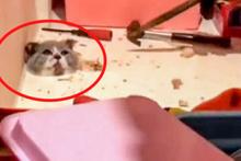 Kedi öyle bir yere sıkıştı ki!