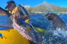 Fok balığının şoke eden hareketi!