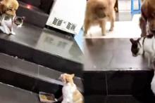 Kediyi kavgadan çekip alan köpek