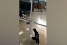 Kediye bir türlü atar yapamayan köpek