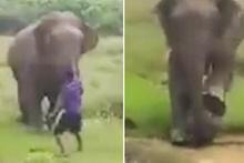Fil dehşeti kamerada! Adamı ezerek öldürdü