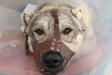 Sahibi kanlar içinde buldu köpeğin vücuduna saplanmış onlarca...