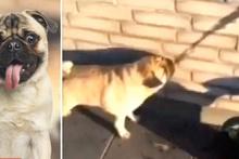 Sevimli köpek, su yerine gölgesini içmeye çalıştı