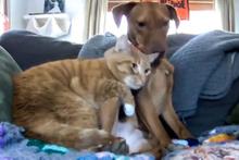 Evcil hayvanlar evde kimse yokken neler yapar!