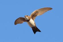 Kur'an 200 gün uçan kuşları böyle anlatıyor