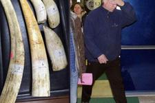 Zonguldak'ta servetlik balina dişi bulundu