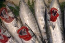 Soğuk hava balık fiyatlarını vurdu! Bakın ne kadar oldu