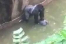 Hayvanat bahçesinde dehşet anları!