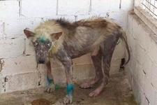 Manisa'da insanı utandıran görüntüler!