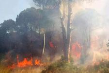 Antalya'da orman yangını! Yollar kapatıldı!