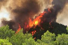 Tatil cennetinde 3 farklı noktada yangın!