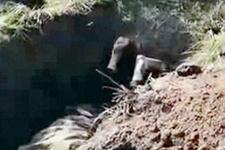 Ukraynalı askerler Rus ayrılıkçıyı diri diri gömdü