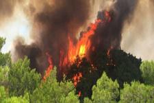 Antalya'da orman yangını! Havadan ve karadan müdahale ediliyor