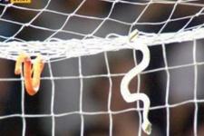Avustralya A Ligi'nde kaleciye yılan fırlattılar