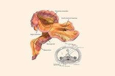 İnsan vücudunda yeni organ keşfedildi bilim şokta!