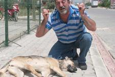Köpeği işkence ederek öldürdüler!