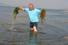 Sapanca gölünde sevindirici gelişme