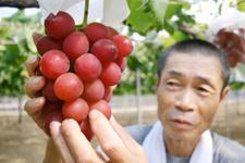 Bu üzümlerin salkımı 21 bin lira