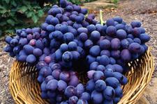 Siyah üzümün antioksidan özelliğine dikkat!