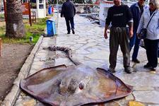 Gökova'da 200 kiloluk vatoz yakaladı gören inanamadı