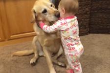 Köpekler ve bebeklerin muhteşem dostluğu!