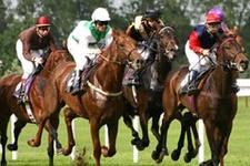 Kocaeli TJK at yarışı 12 Temmuz 2016 altılı ganyan bülteni
