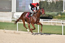 İzmir TJK at yarışı 14 Temmuz 2016 altılı ganyan bülteni