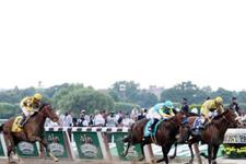 Ankara TJK at yarışı 1 Eylül 2016 altılı ganyan bülteni