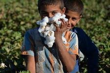 Şanlıurfa'da çocuklar harçlığını pamuktan çıkarıyor