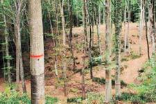 Belgrad Ormanı'ndaki o işaretlerin sırrı çözüldü!