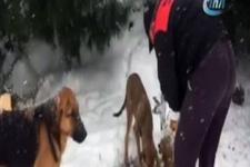 Maltepe'de mama verilen köpeklerin mutluluğu kamerada